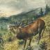 Jagd-Wild [R]