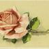 [Rose mit Dornen]